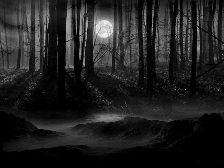 forest-at-night